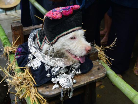 dog-festival-china.jpg
