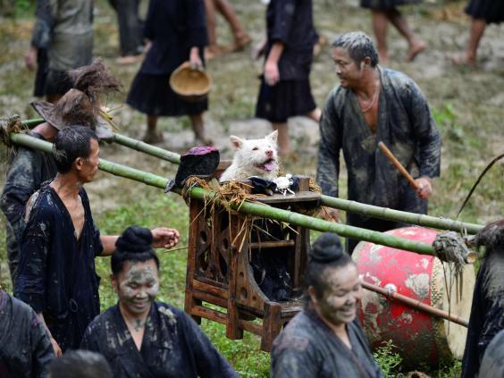 dog-festival-china2.jpg