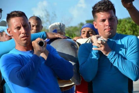 cuba-dolphins-1.jpg