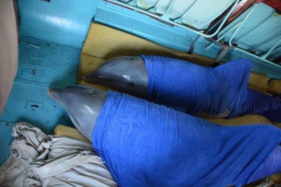 cuba-dolphins-3.jpg