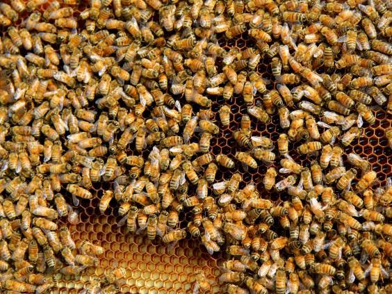darwin-bees.jpg