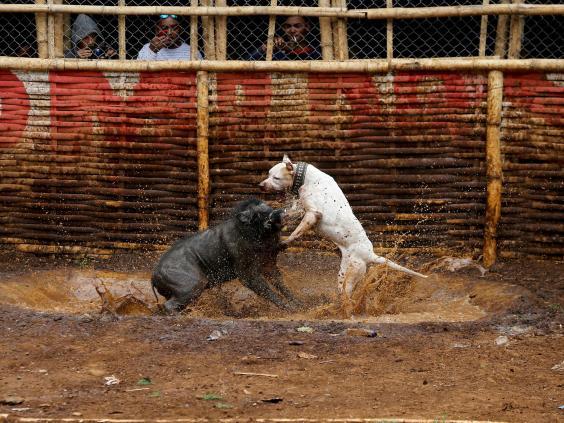 dog-vs-wild-boar2.jpg