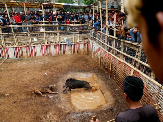 dog-vs-wild-boar3.jpg