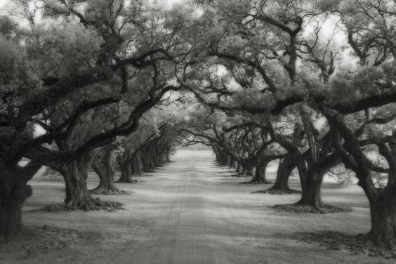 avenue-of-oaks-copy.jpg
