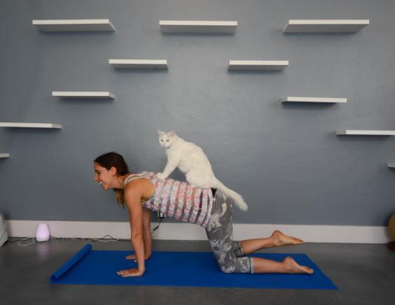 cattherapy-yoga-courtesyvisitsantabarbara-1832.jpg