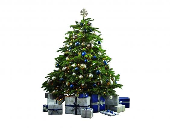 13 Best Real Christmas Trees
