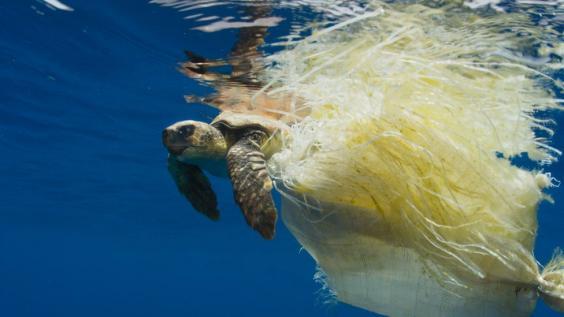 Schildkröte-Plastik-2.jpg