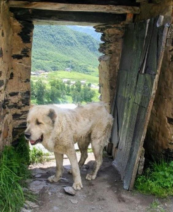 ushgali-dog.jpg