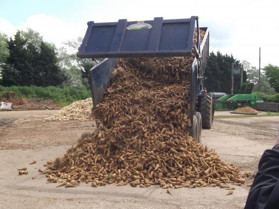 parsnip-food-waste.jpg