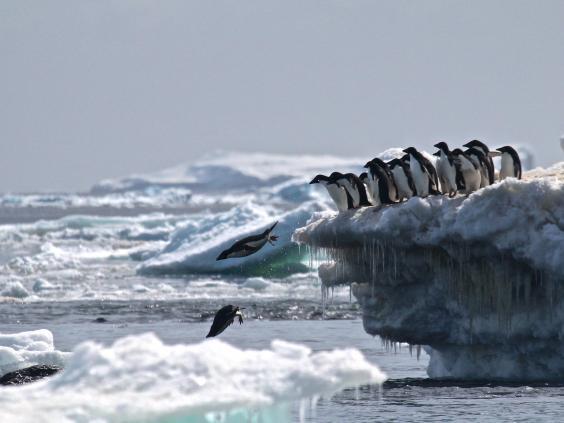 adelie-penguins.jpg