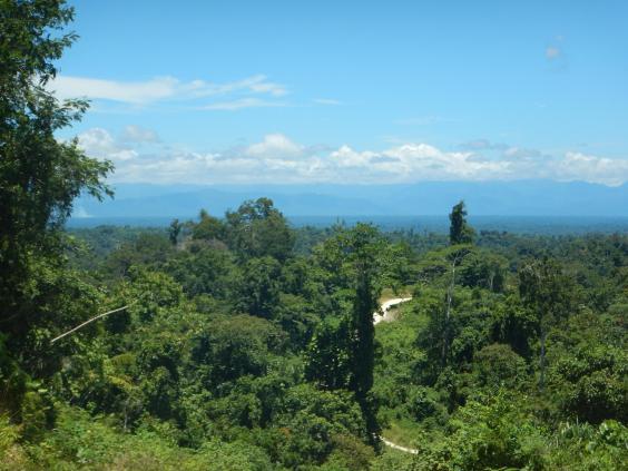 papua-logging-2.jpg