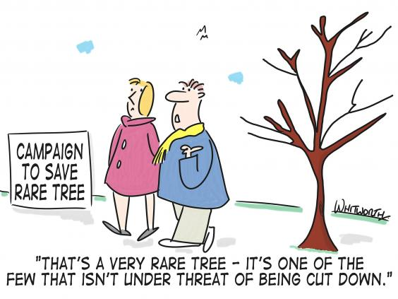 sheffield-tree-cartoon.jpg