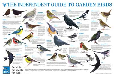rspb guide to british birds