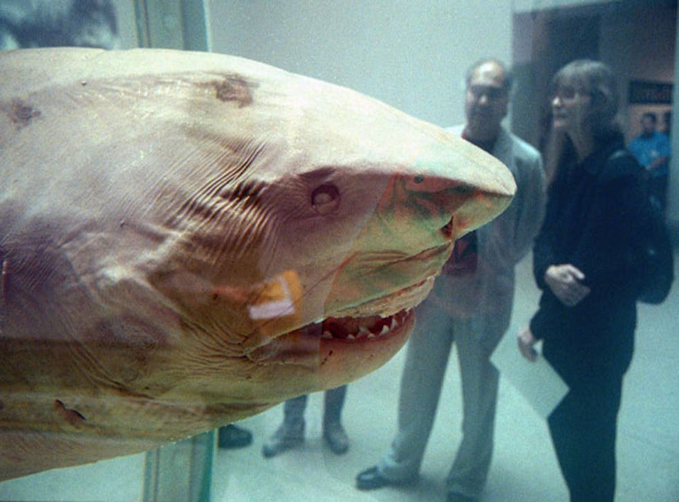 Damien Hirst's 'The Physical Impossibility of Death in the Mind of Someone Living' aka 'the shark'.