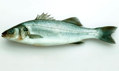 Sea bass: the superstar of the seas | The Independent