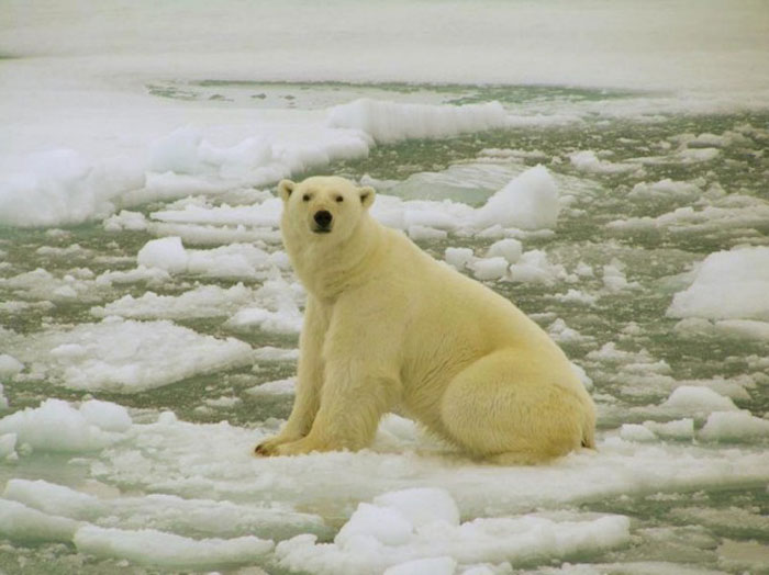 Ecotherapy patients say articles about polar bears losing their habitat make them ill