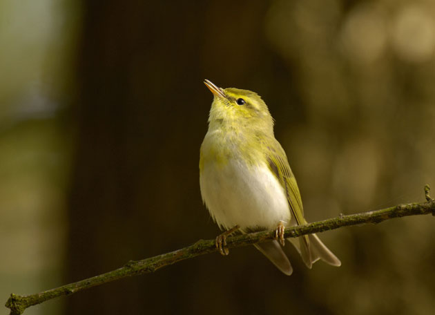 Traffic noise may make birds age more quickly, study finds