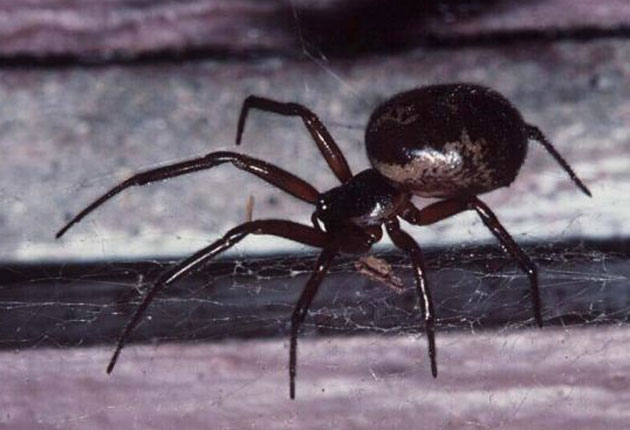 Dad almost loses part of leg after being bitten by spider in own garden