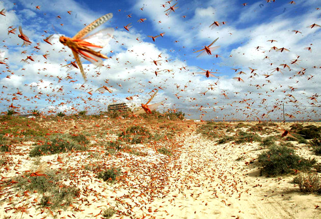 Image result for locusts groups