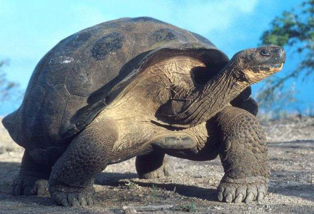 Evolving glory of the Galapagos | The Independent