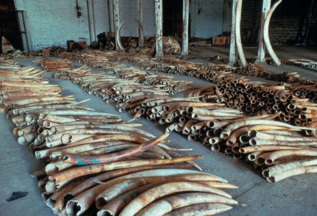 Hong Kong's 'legal' ivory trade thrives on folk beliefs and