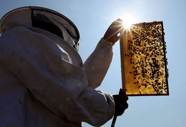 The Government is launching a review of why the bee population is declining