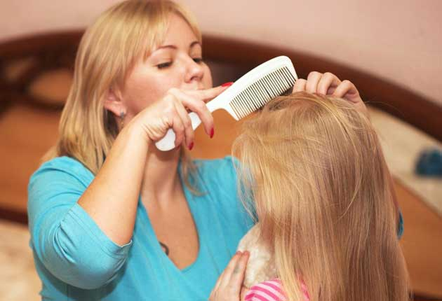 How To Get Rid Of Head Lice The Independent