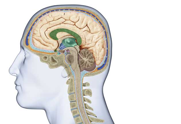 Secrets Of The Brain  The Grey Matter That Makes Us Who We Are