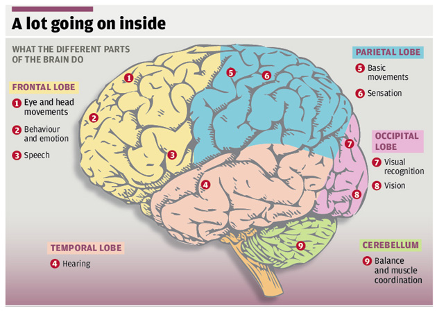 The Big Question What Do We Know About The Human Brain And
