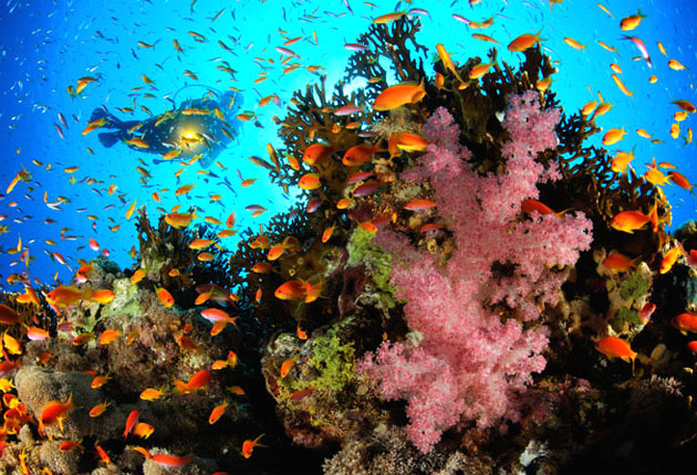 are coral reefs in danger Coral reefs are vanishing from ocean floors at an alarming rate, but if the corals disappear there are many other sea creatures that will go with them find out what we have to lose if we don't act fast.