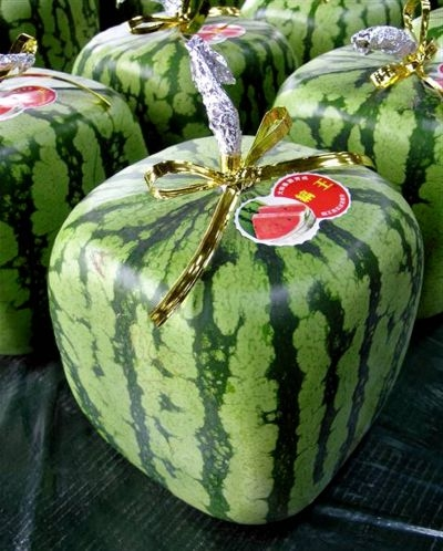 Grow Your Own Square Watermelon
