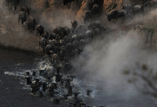 <p>The wildebeest migration is not to be missed</p>
