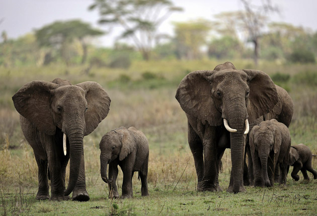 Elephant tails and ears are among imports to the UK
