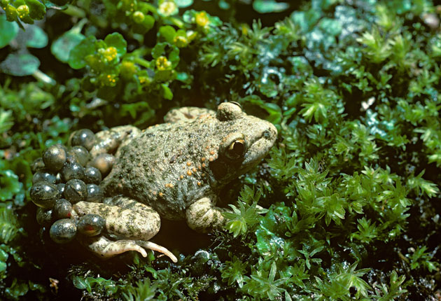 <p>Up to one million species face extinction, scientists say </p>