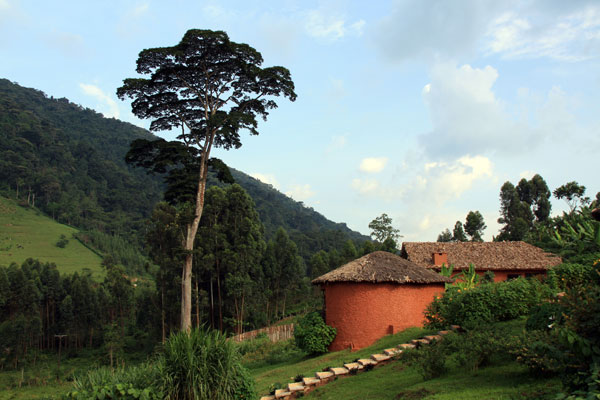 Branch out: Mahogany Springs offers a stylish base for gorilla tracking in Bwindi Impenetrable Forest