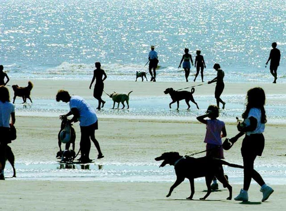 Misunderstanding a best friend: Dog-walkers