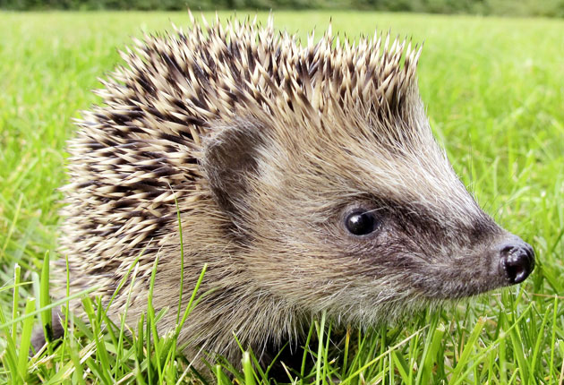 The public is being urged to take part in a survey of hedgehogs