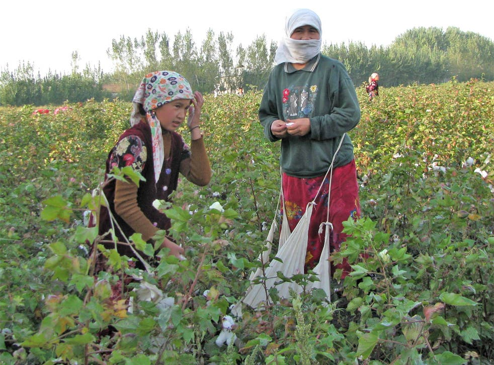 Young cotton pickers working in Uzbekistan