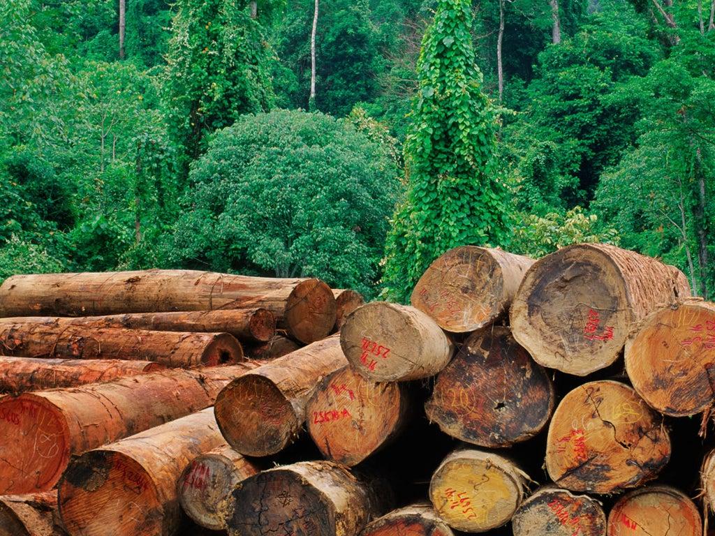 Best essay on deforestation a big disaster