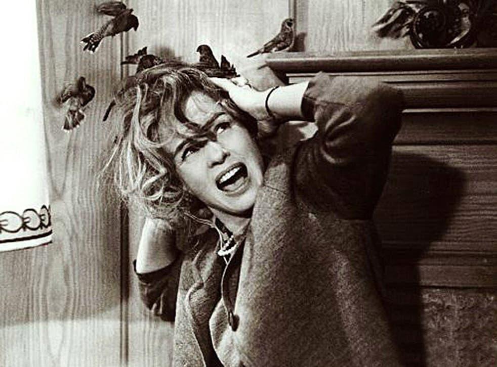 The mysterious bird deaths inspired Hichcock's film, The Birds