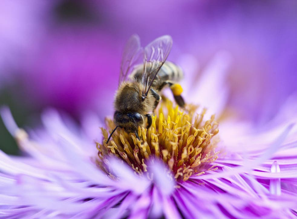 Defra has now admitted the health of bees is a 'serious issue'
