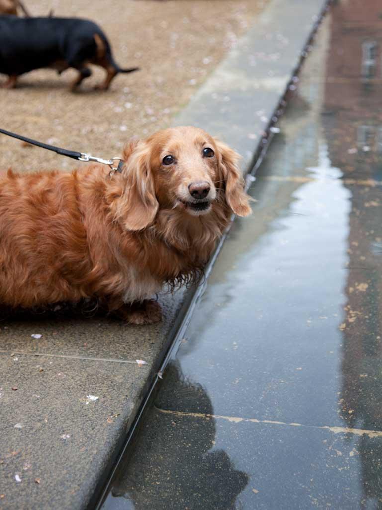 Assebley of Dog