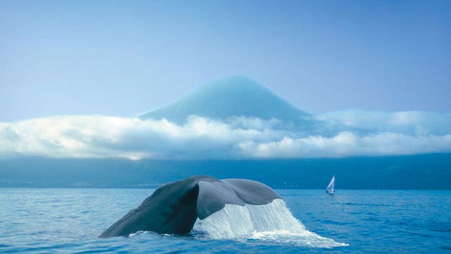 Tailspin: A sperm whale dips back under the water