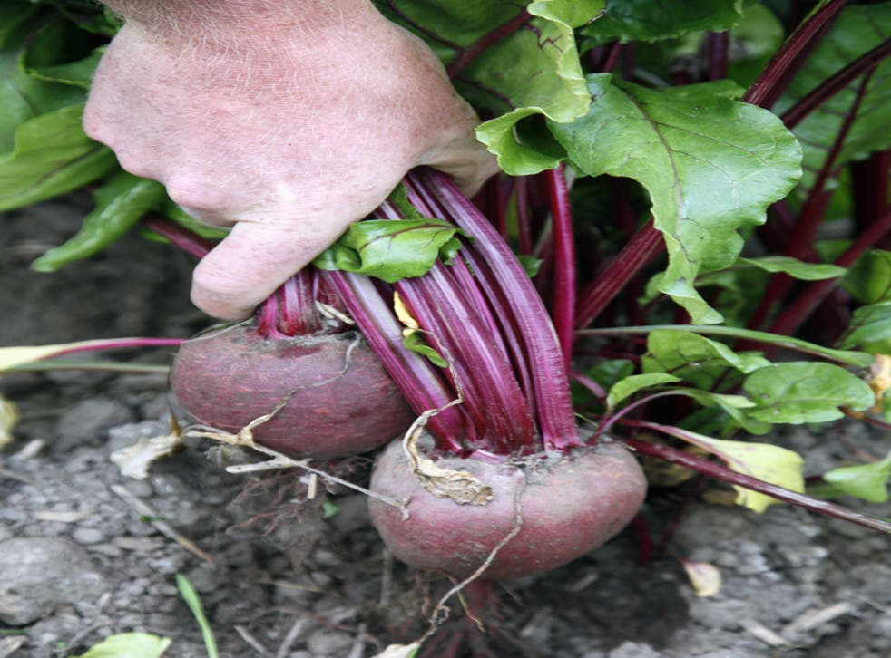 Researchers are investigating the effects beetroot has on the body by studying how it benefits high-altitude climbers