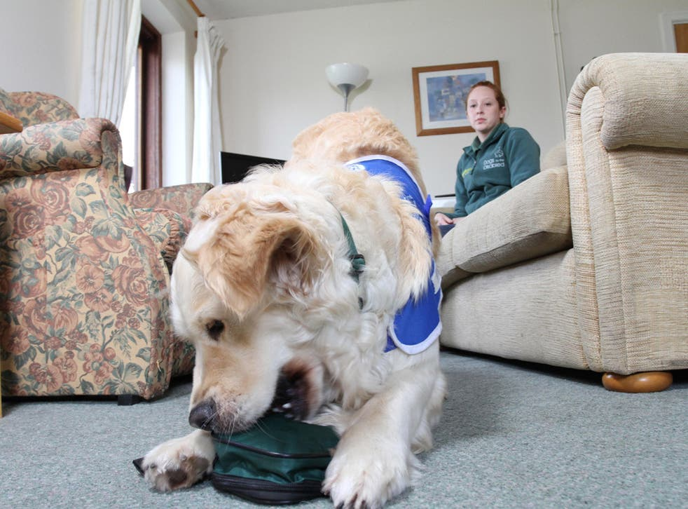 Two-year-old Tilly is being trained to carry medicine for her owner at Dogs for the Disabled in Banbury