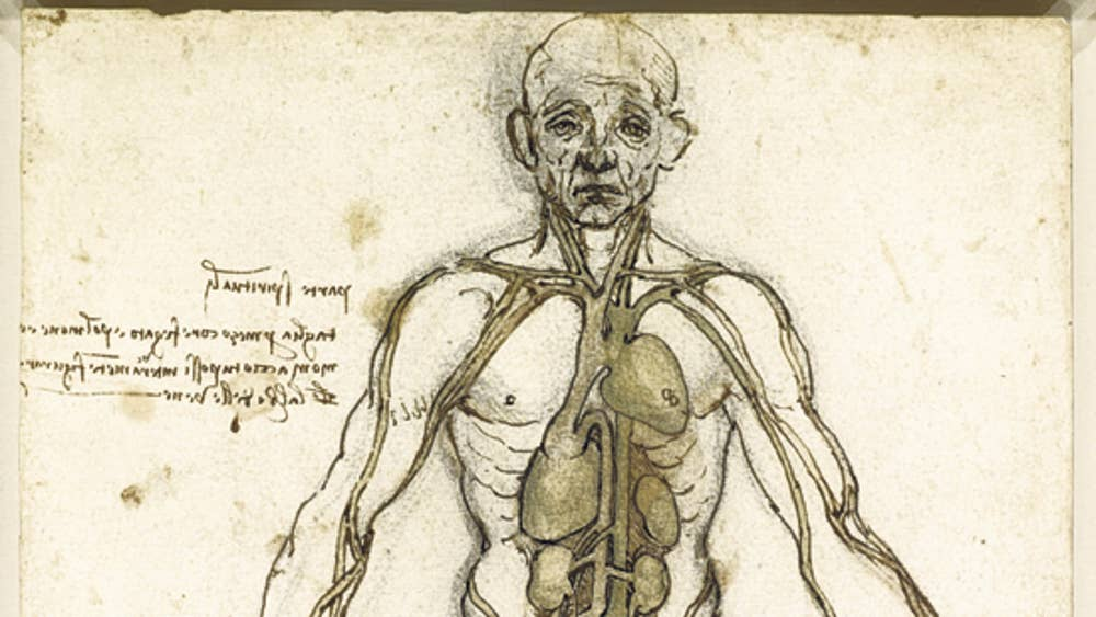 Leonardo Da Vinci And The Body Beautiful The Independent