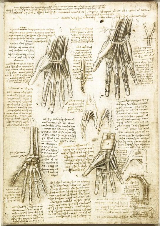 Leonardo Da Vinci And The Body Beautiful The Independent