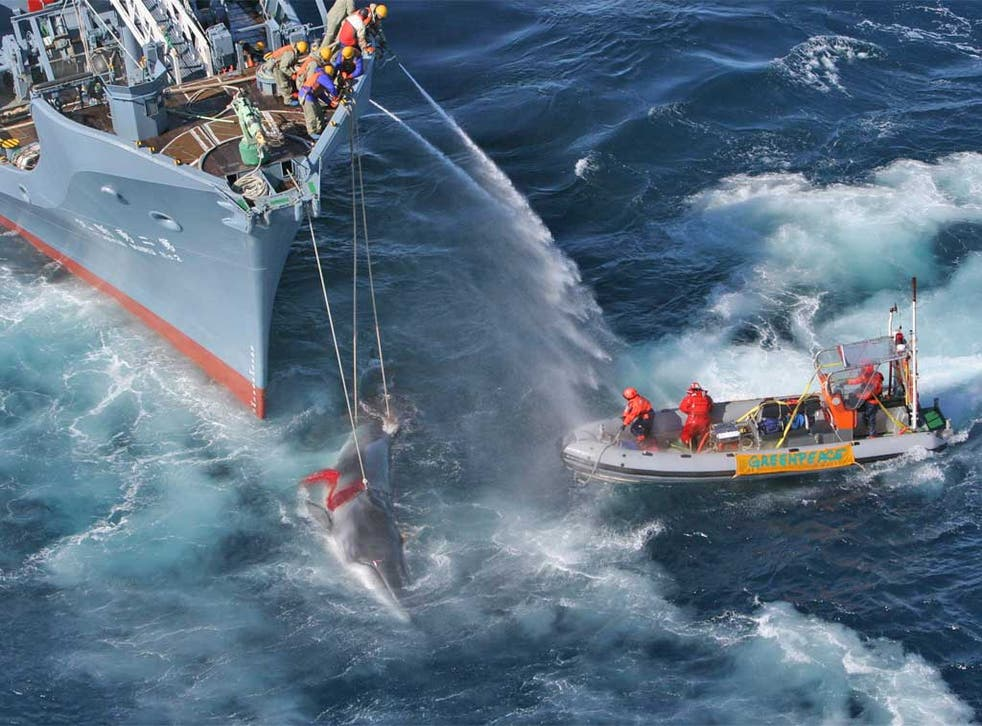 Greenpeace activists confront a Japanese whaling fleet hunting minke