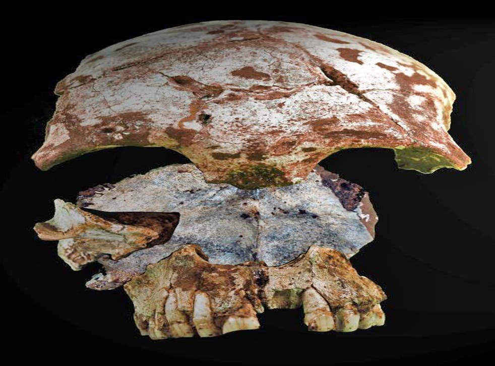 The pieces of skull of an early modern Homo sapiens, found in the Tam Pa Ling cave in Laos. Dating suggests it is between 46,000 and 63,000 years old, making it the oldest skeletal remains of modern man in Asia