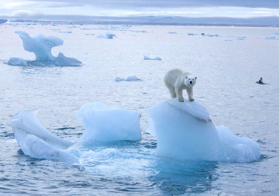 Image result for melting arctic